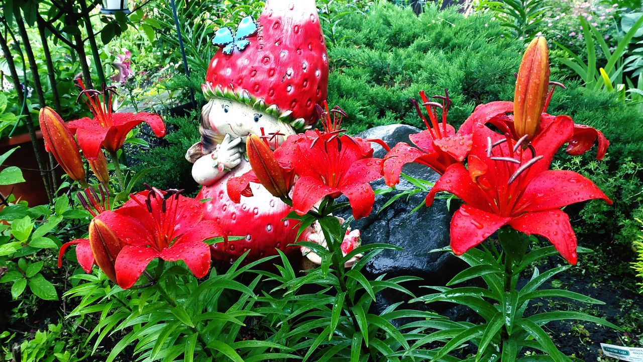Wet Red Lilies Growing By Statue In Garden