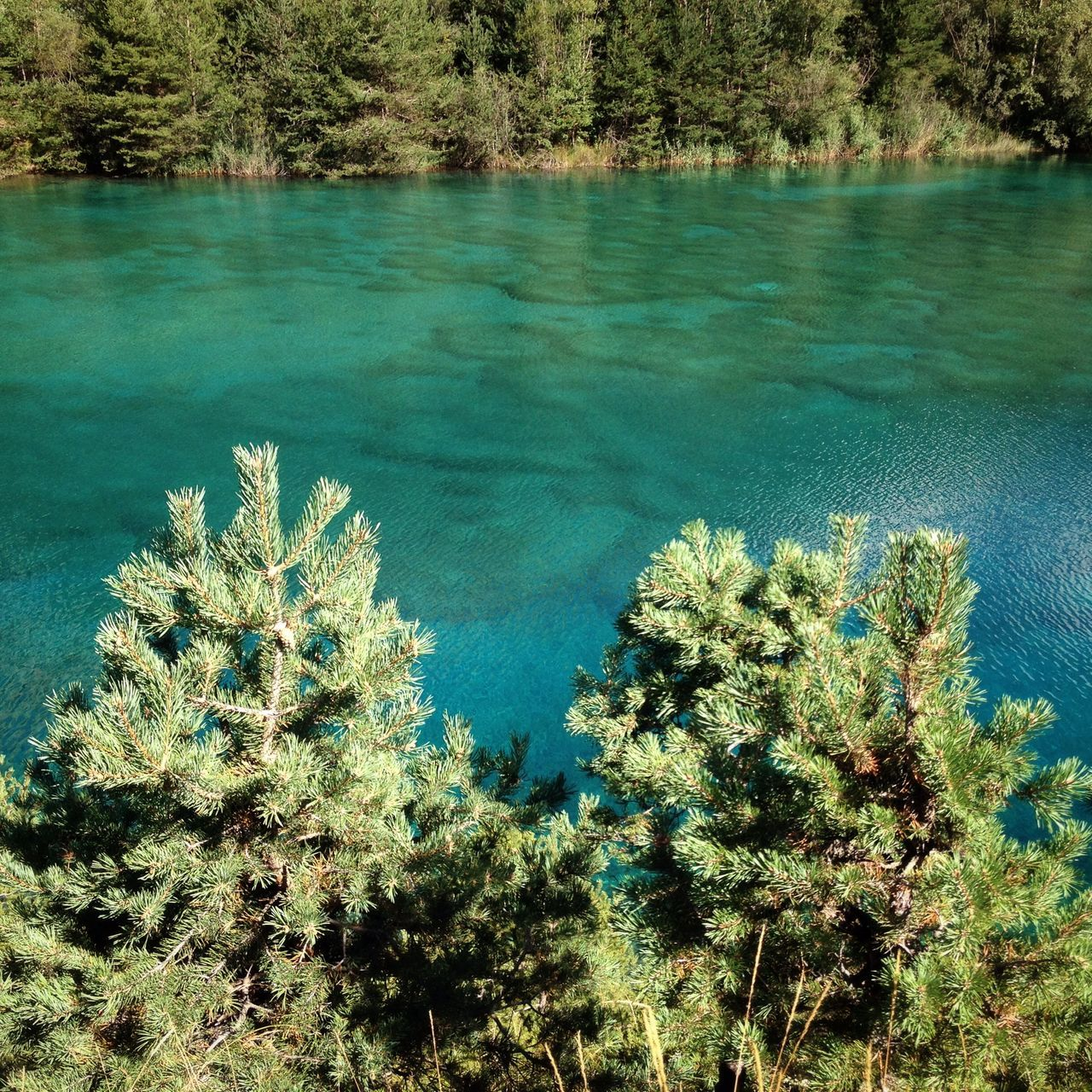 Green alpine lake Green Beauty In Nature Lake Conifers