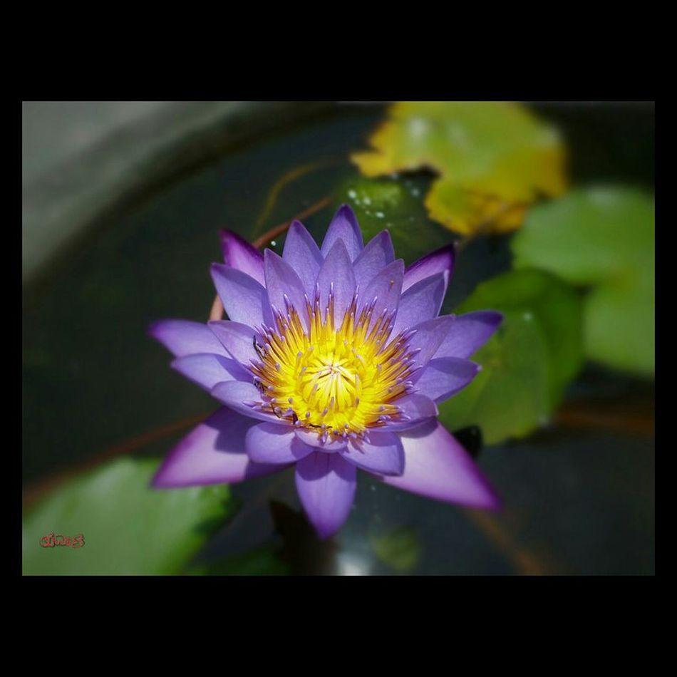 EyeEm Best Shots Nature_collection EyeEm Nature Lover Flowerporn