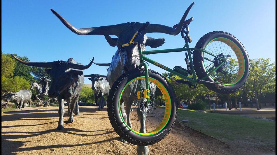 Texas long horn cattle herd with a ride along fat bike. Bicycle Transportation Cycling Outdoors No People Mountain Bike Wheel Mode Of Transport Cattle Herd Cattle Drive Cattle Statue Fatbikes Fatbikelove Fatbikeworld Fatbikelife Fatbikeadventures Fatbikeculture Fatbike Mountain Bike Nicepic Mountainbike Pedal