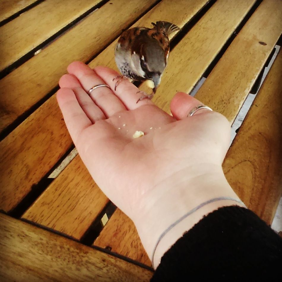 While I was drinking my mojito, a little bird came twice to share a snack with me 😊 Birds🐦⛅ Human Hand Women Ring Beauty Close-up Birdporn Birds_collection Wood - Material Bird Eating Birdstagram Birds In City City Wildlife City Wilderness Paris Boat Peniche
