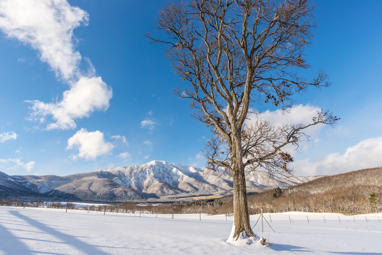 Beauty In Nature Blue Cold Temperature Day Forest Japan Landscape Miyagi Mountain Nature No People Outdoors Sky Snow Tohoku Tree Winter