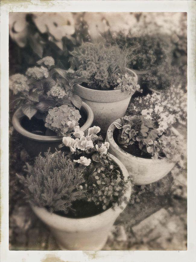 Urban Gardening Flowers Flower Collection EyeEmBestEdits Eye4photography  Bw_collection Blackandwhite AMPt_community