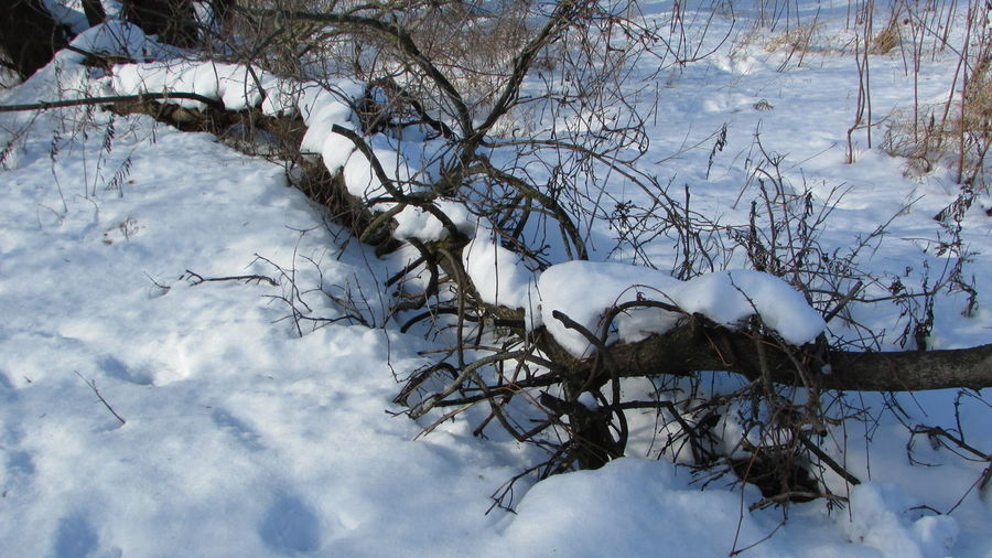 On My Walk Clam River Walkway Snow Covered Downed Tree Wintertime Everything Still Outdoors Cadillac Michigan