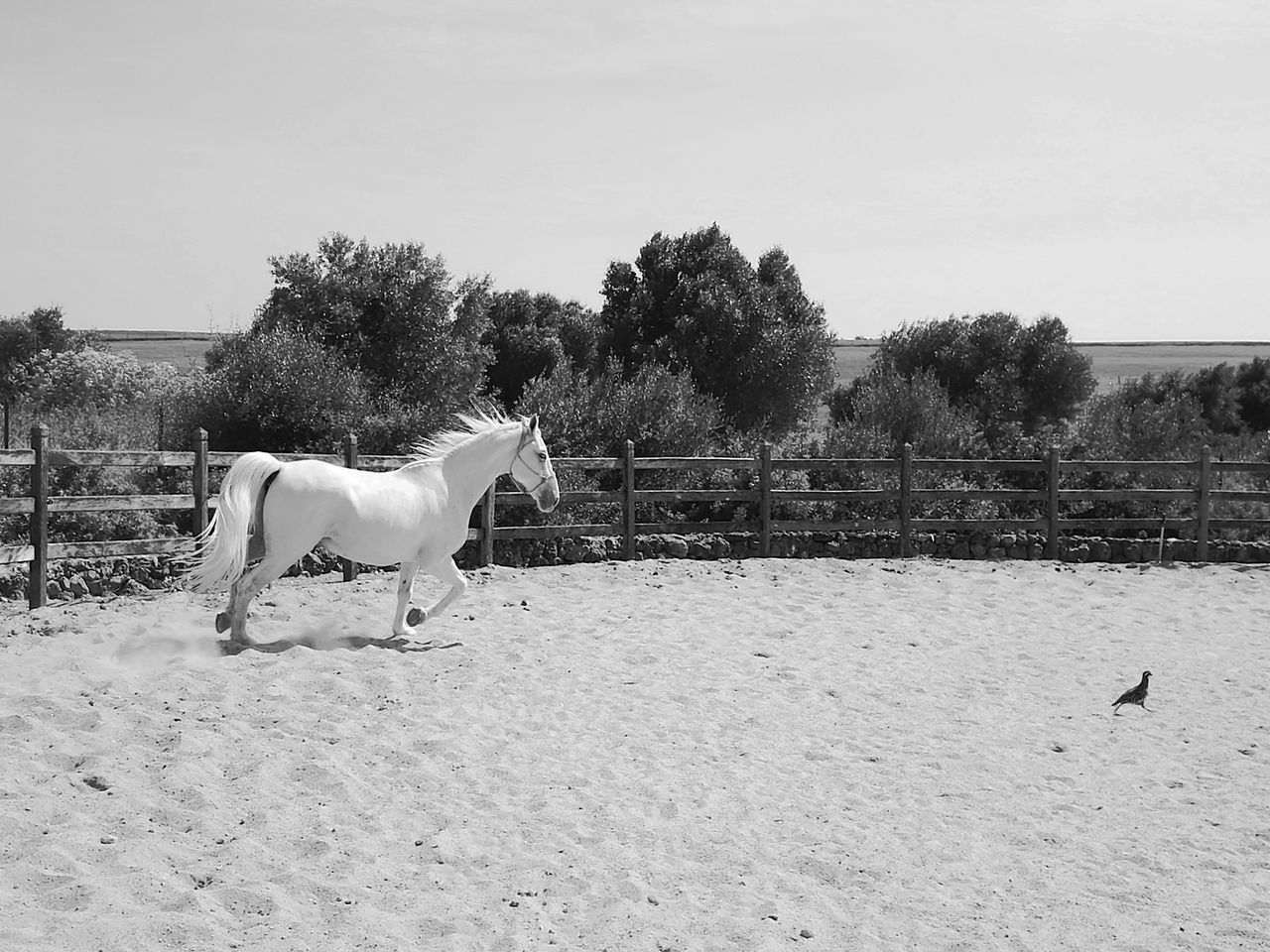 Horse Domestic Animals One Animal Pets Animal Animal Themes Mammal Sky Outdoors Day Tree Nature No People