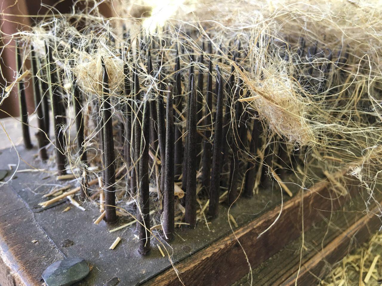 Flax Flax Plant Linen Colonial Era Nails Rustic Beauty
