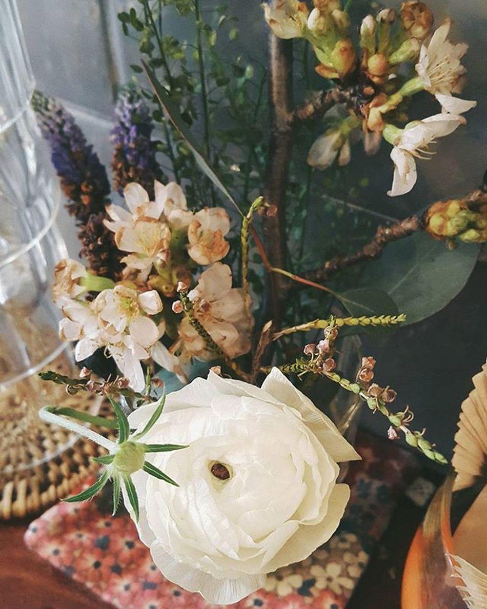 VSCO Vscocam Flowerstagram Instagood Vscoflower Instaflower Flowers Ranunculus Colors Coral Lovely Instadaily Nothingisordinary Photooftheday Lifeisgood Onthetable LifeInColor 花 はな あじさい ラナンキュラス