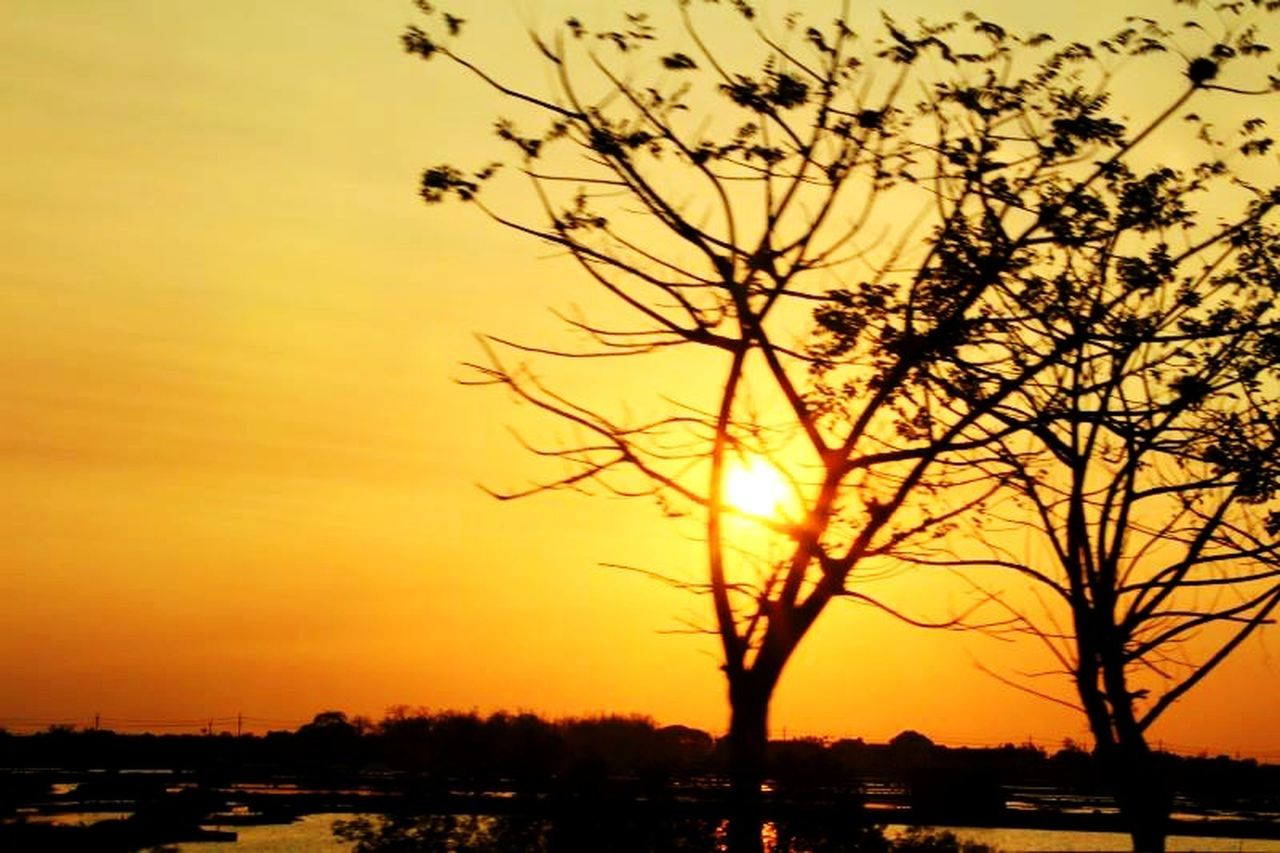 sunset, silhouette, orange color, sky, nature, beauty in nature, tree, scenics, outdoors, no people, tranquil scene, cloud - sky, tranquility, bare tree, bird