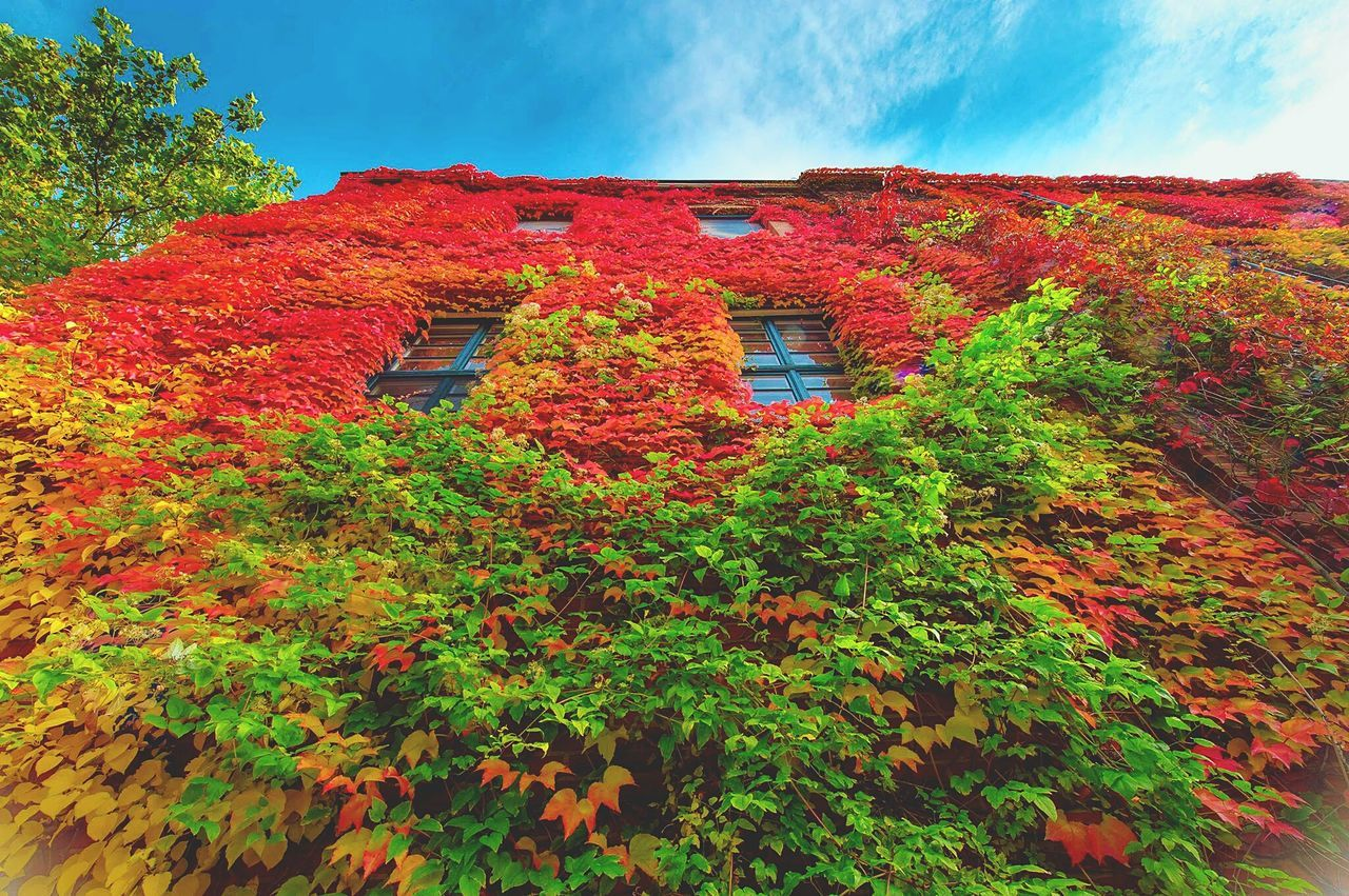 Sky Nature Beauty In Nature Growth Flower Multi Colored Outdoors No People Leaf Tranquil Scene Autumn Scenics Day Landscape Red Plant Lush - Description Bayreuth Facade Building Festspielhaus Bayreuth. Richard Wagner