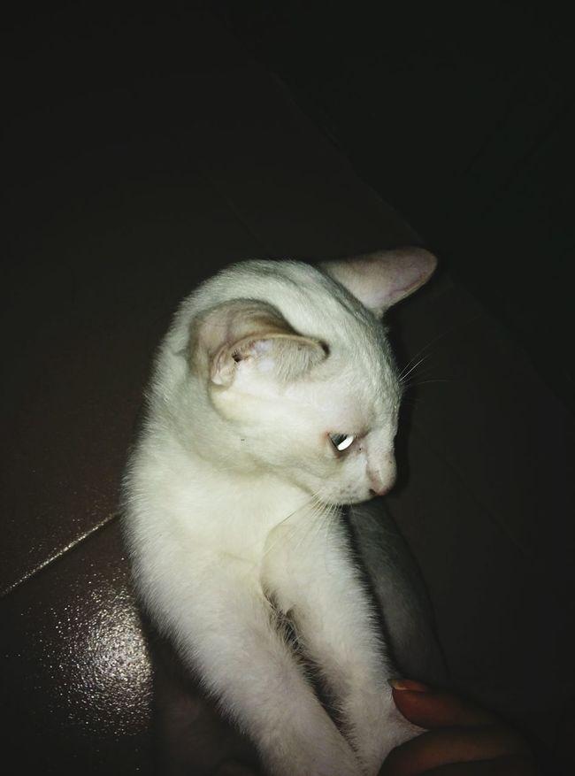 Hello;-) Mizzgo
