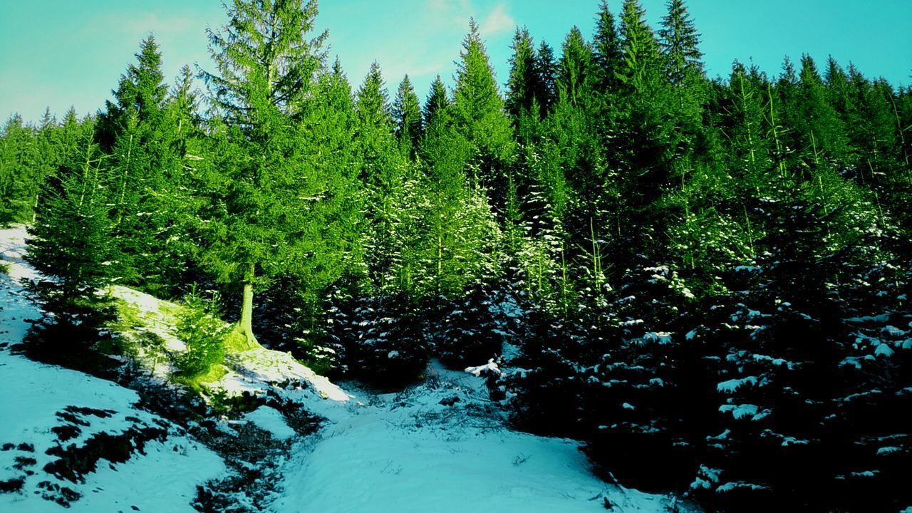 Tree Growth Green Color Nature Sky Beauty In Nature No People Water Tranquility Day Scenics Outdoors Willow Tree Close-up Sunlight Cold Temperature Snow ❄ Snowflakes Pine Tree Mountain Tranquility Frozen Winter Tree Nature
