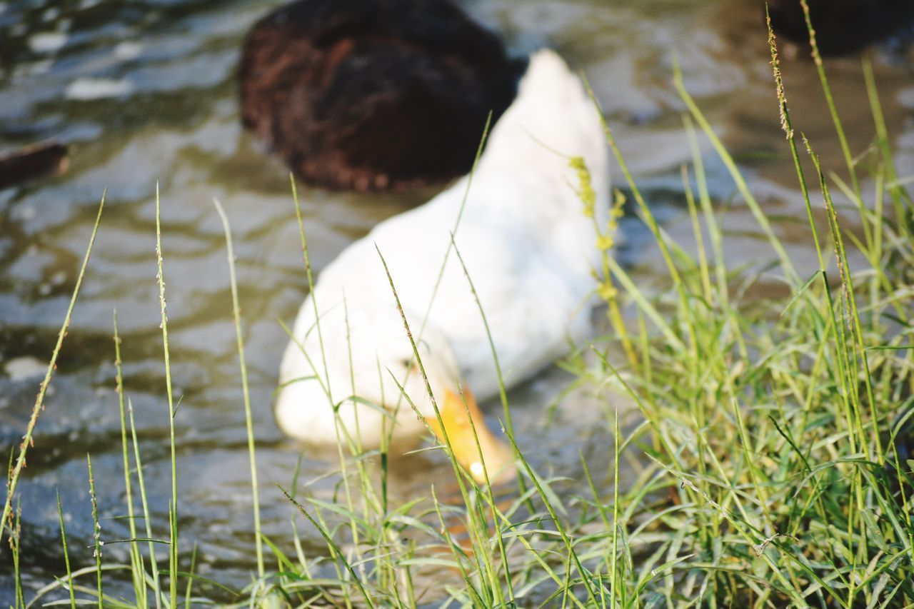 One Animal Grass Animal Themes Domestic Animals Day Mammal Outdoors Pets Nature Close-up No People Bird