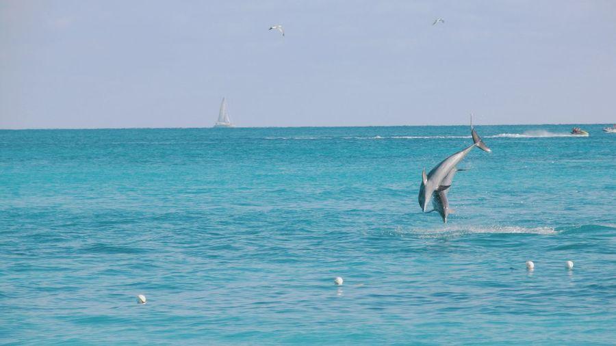 Jump! Hello World Traveling Travel Photography Sea Dolphins Animals Enjoying Life Taking Photos Bahamas