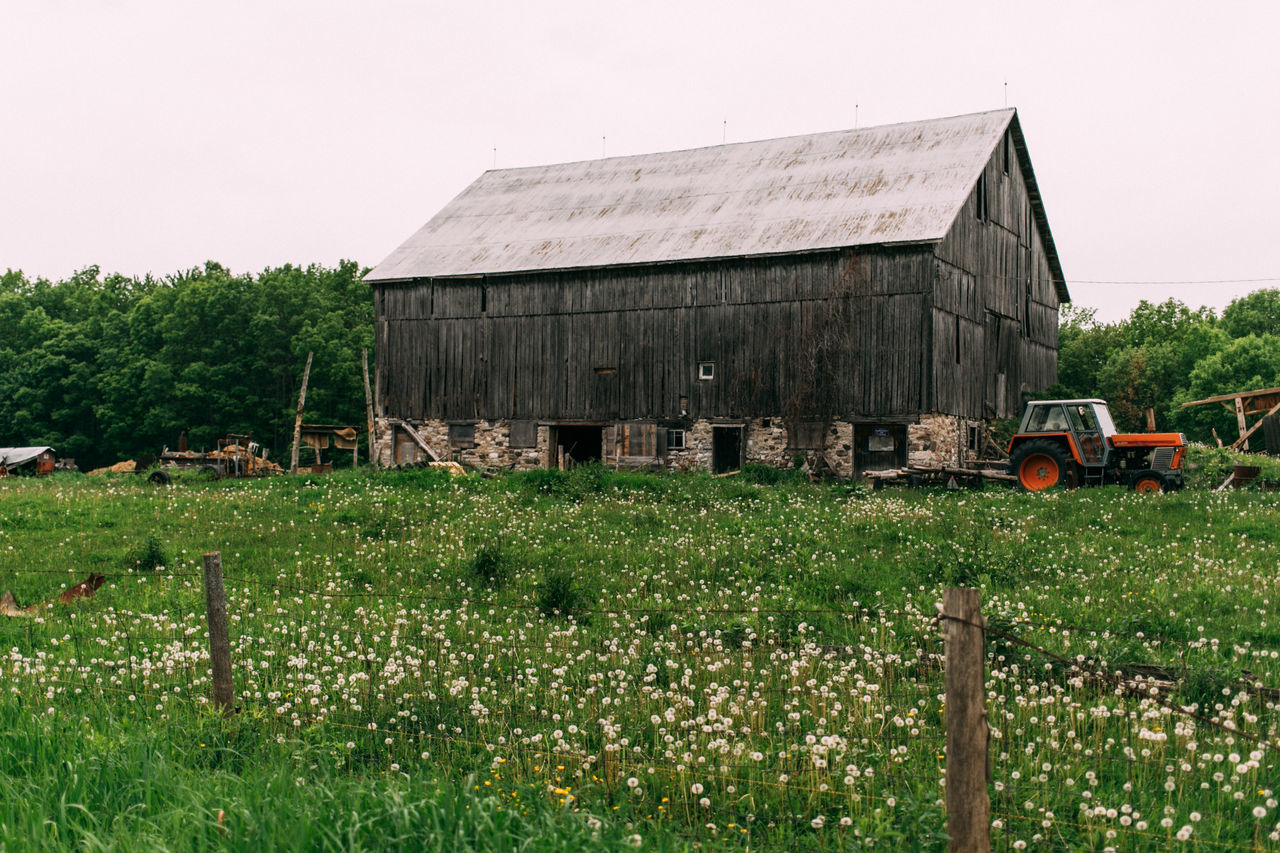 Agriculture Architecture Barn Beauty In Nature Building Exterior Built Structure Day Farm Field Green Color Growth Nature No People Outdoors Plant Rural Scene Sky Tree