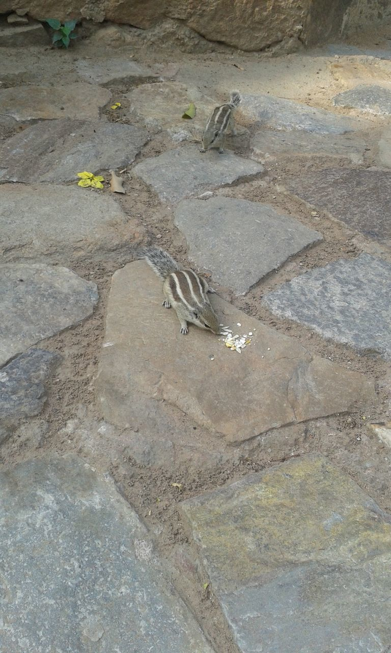 animal themes, one animal, animals in the wild, high angle view, animal wildlife, bird, day, no people, outdoors, rock - object, water, nature, sparrow, reptile, perching, mammal, bird of prey