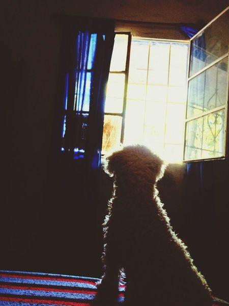 Dog Light Window Contrast