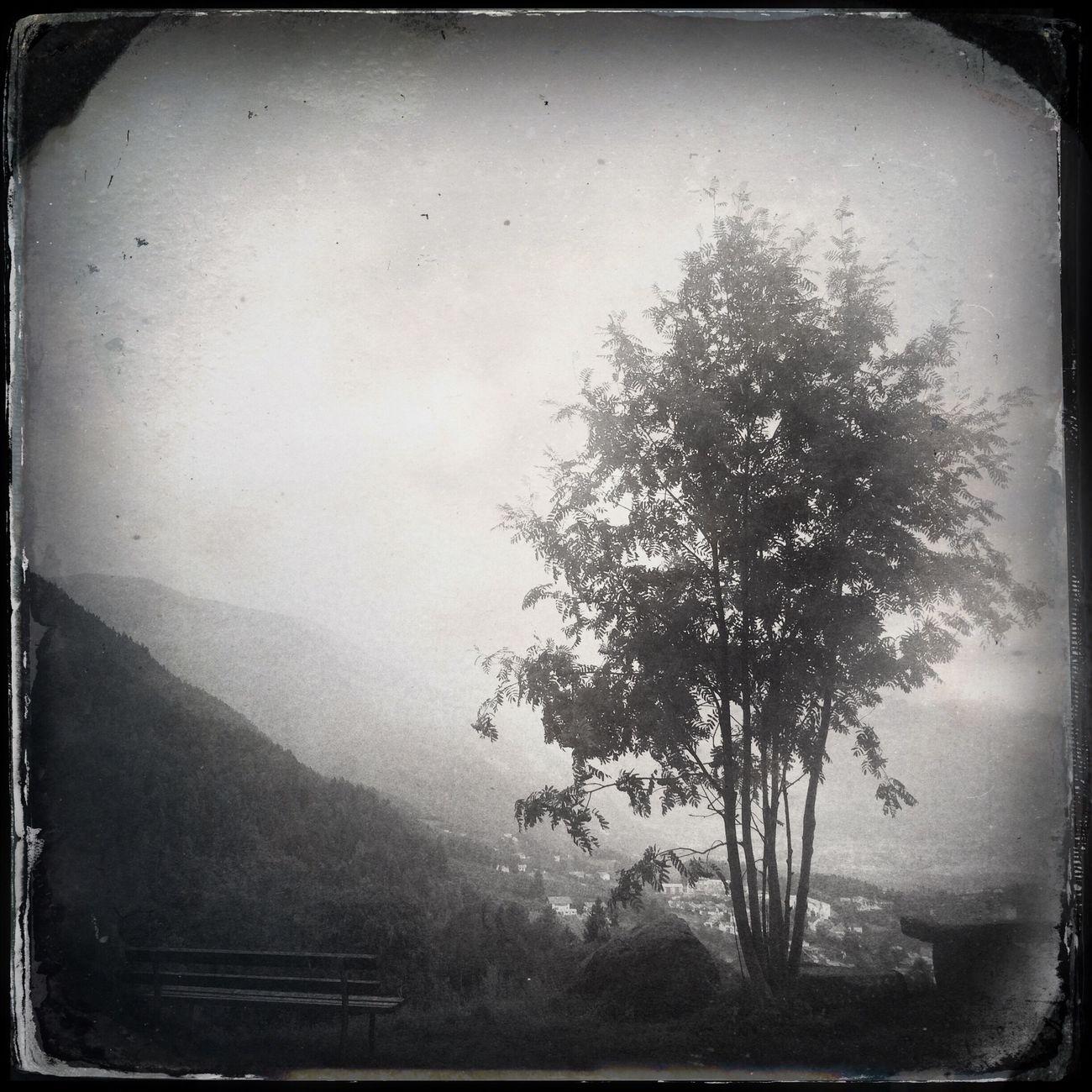 It's raining Blackandwhite Tree Hipstamatic The_guido