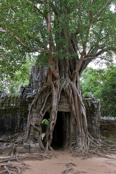 Lifeasiseeit John Nelson Tree Ta Prohm Reclaiming Nature Tomb Raider  Angkor Wat Architecture Cambodia Southeast Asia Temple Worldheritage History Entrance Doorway Southeastasia Jungle