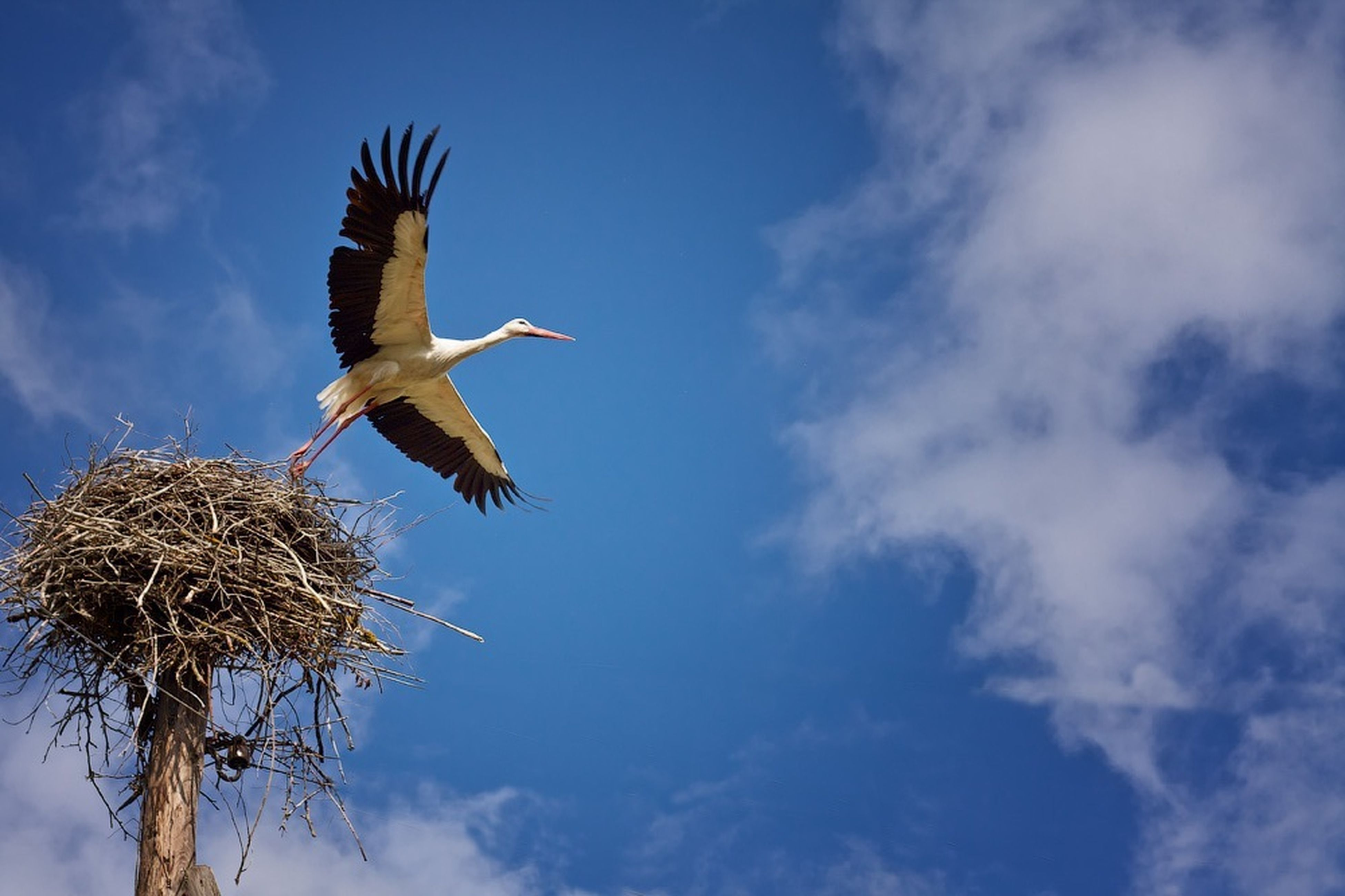 flying, low angle view, mid-air, animal themes, sky, spread wings, animals in the wild, one animal, wildlife, bird, cloud - sky, airplane, motion, blue, on the move, flight, air vehicle, cloud, transportation, animal wing