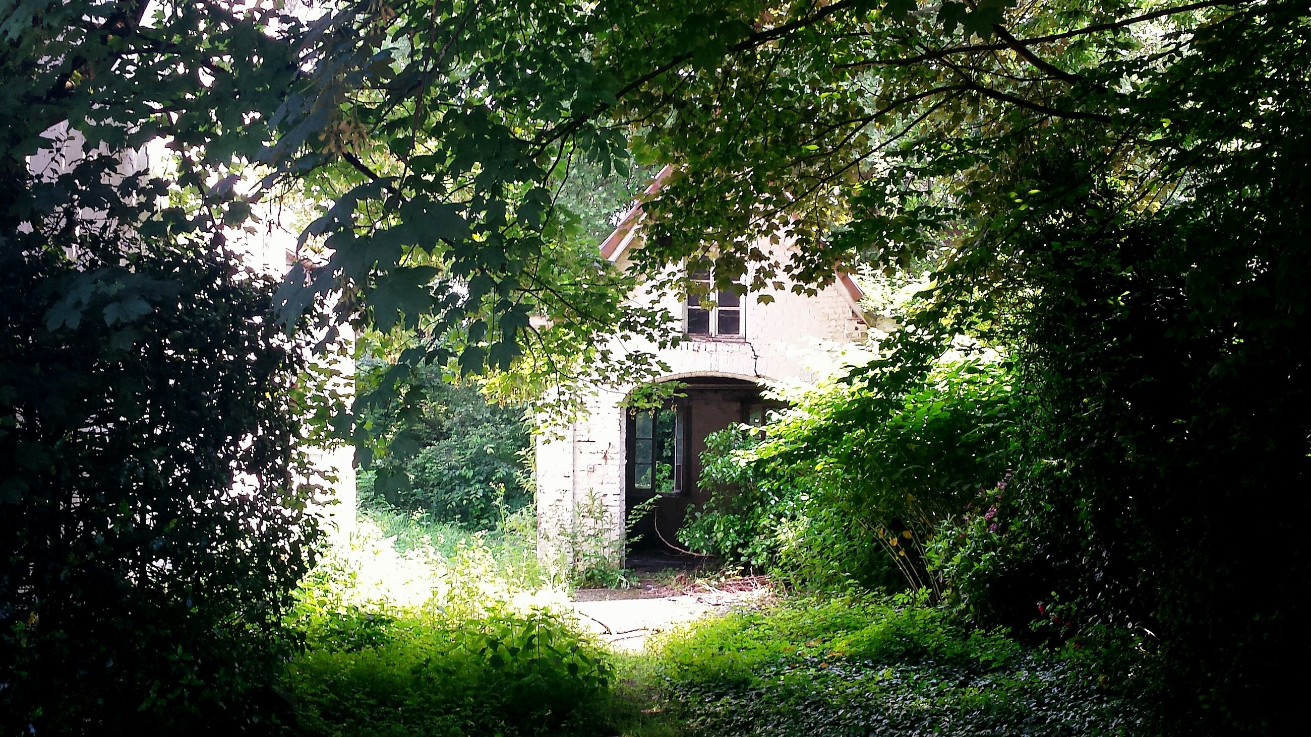 tree, building exterior, architecture, built structure, growth, branch, green color, house, plant, tree trunk, nature, low angle view, day, outdoors, sunlight, no people, leaf, residential structure, building, tranquility