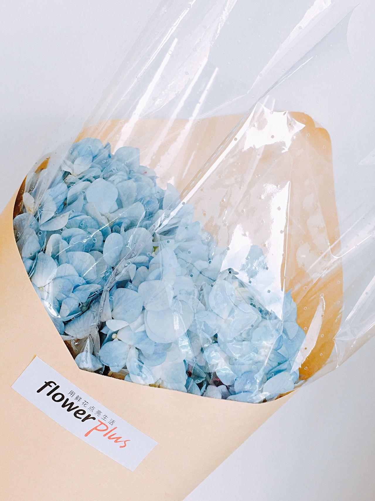 Fafa Flowerporn Blue Hydrangea