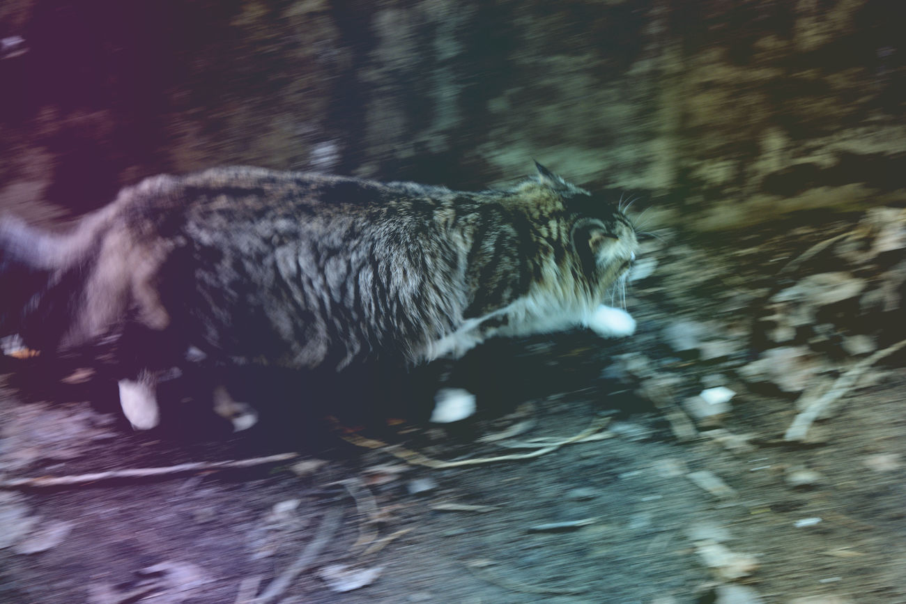 One Animal Animal Themes Motion Pets Domestic Cat No People Water Domestic Animals Mammal Day Outdoors Lomography Multicolor Cats Of EyeEm Dark Rainbow Colors Movement