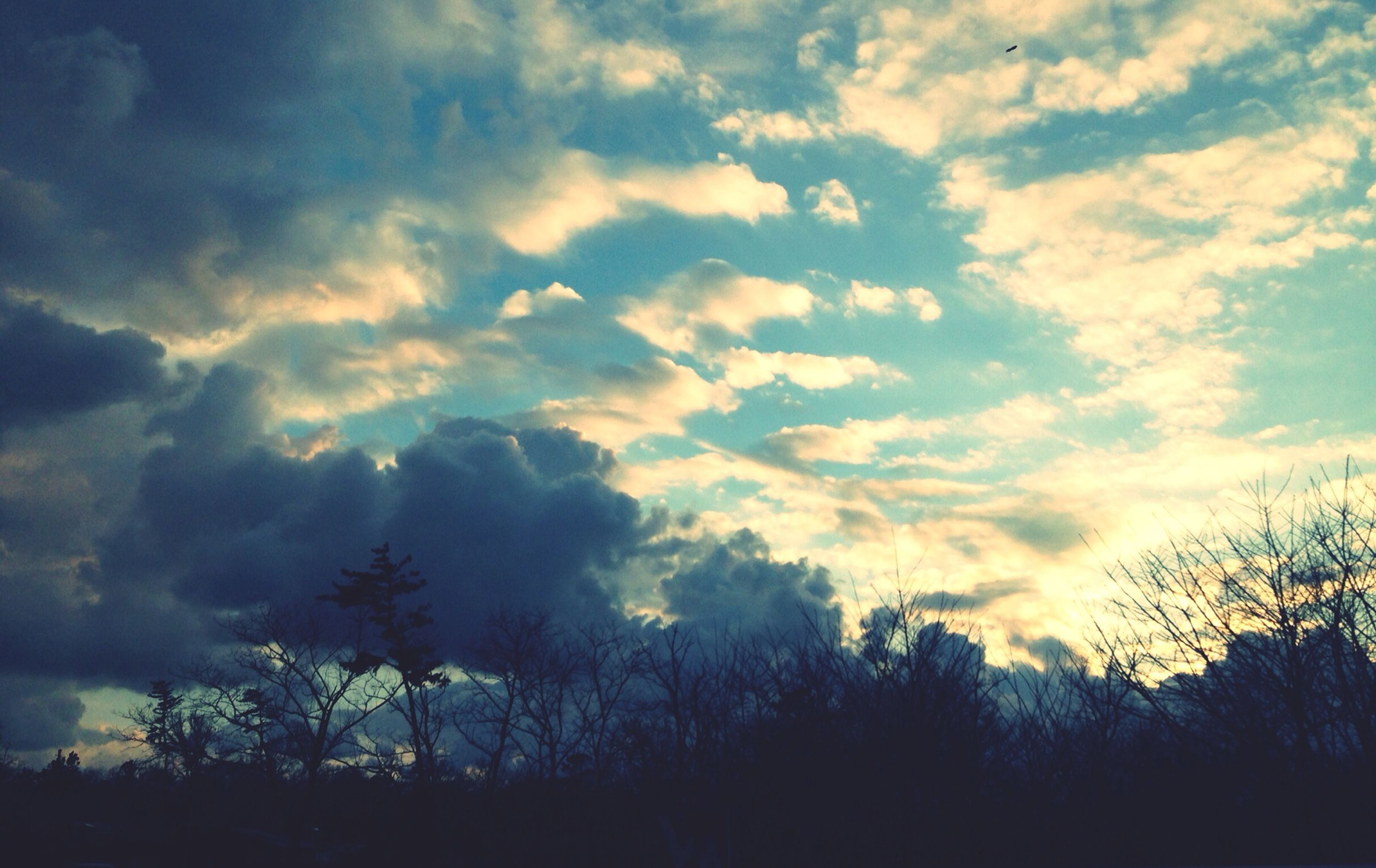 silhouette, sky, tree, tranquility, cloud - sky, tranquil scene, beauty in nature, scenics, low angle view, nature, cloudy, cloud, sunset, idyllic, growth, outdoors, no people, dusk, non-urban scene, landscape