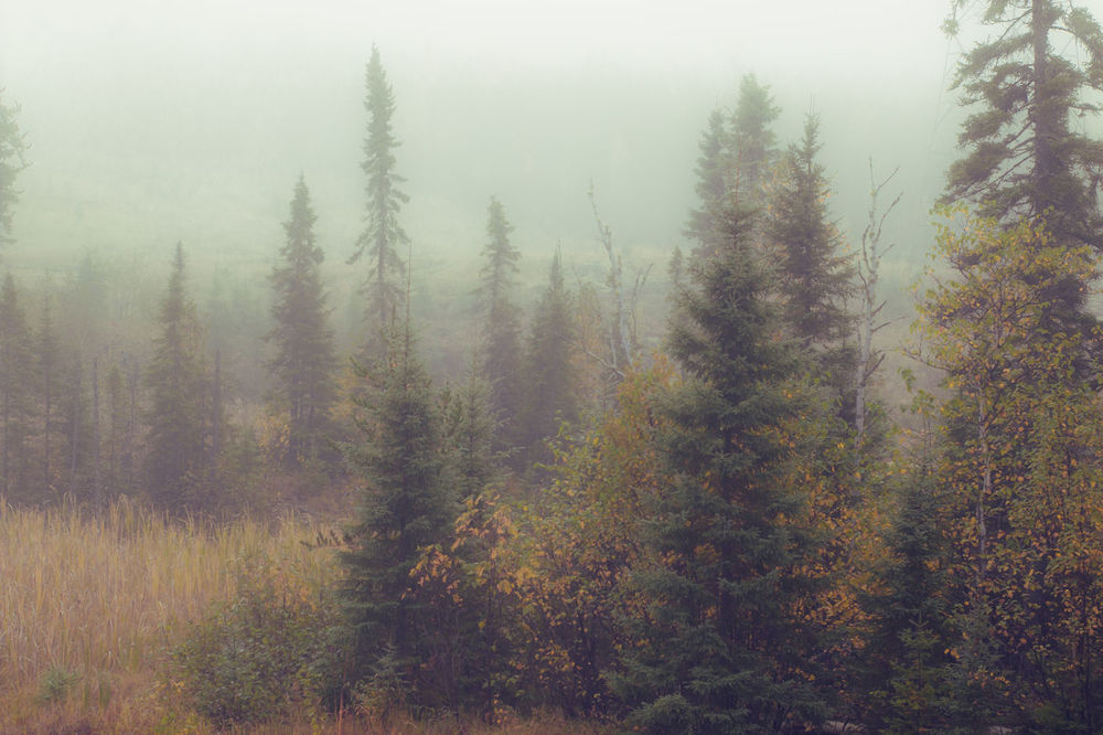 Betterlandscapes No People Trees And Sky Summer Morning Sky Nature Beauty In Nature Scenics Foggy Early Morning Landscape Misty Morning Mist Day Morning Light Outdoors Foggy Morning Tree Morning Sun And Fog Fog