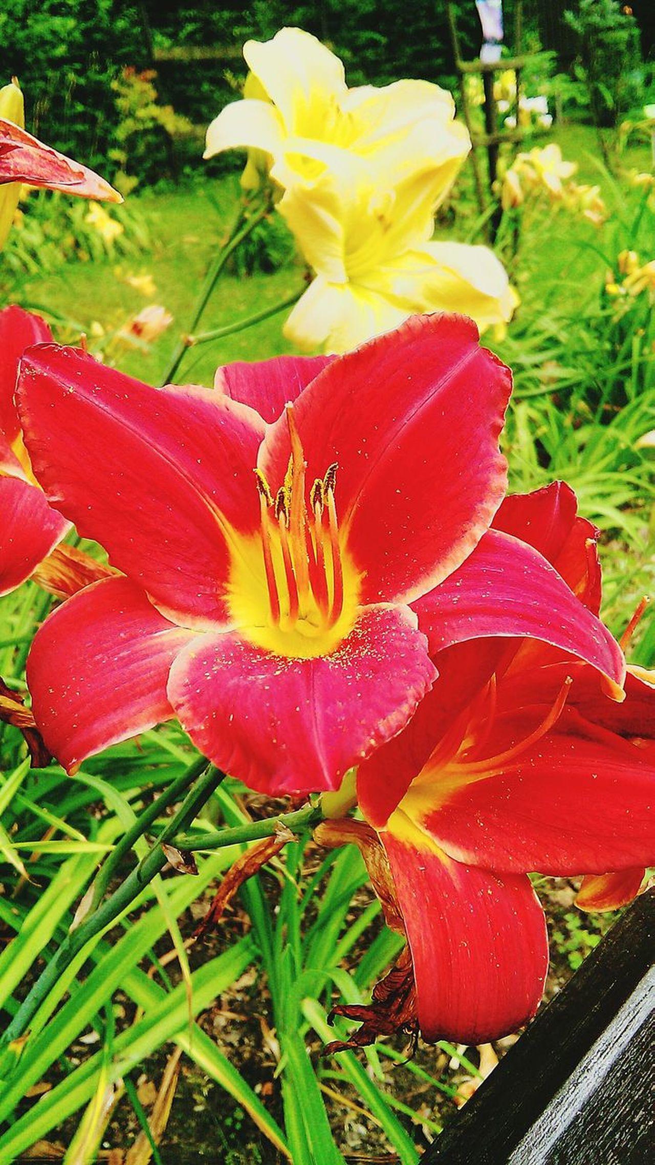 Flower Power🌼 Enjoying Life Mystery Garden