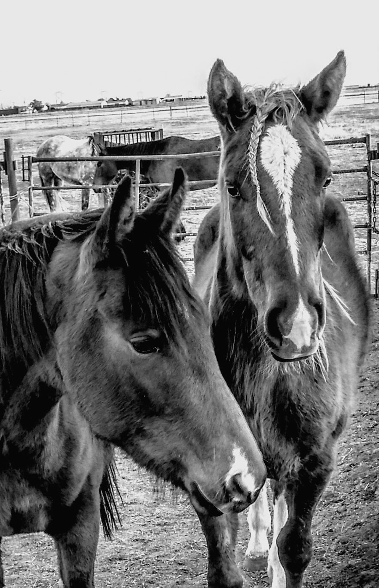 Ranch horses Horse Animal Themes Domestic Animals Mammal Livestock No People Nature Ranch Ranch Life Barn Mane Farm Cowboy Stable Livestock Country Living Sunlight Lifestyle Pasture, Paddock, Grassland, Pastureland Working Animal Pony Filly Country Life Paddock Hoofed Mammal