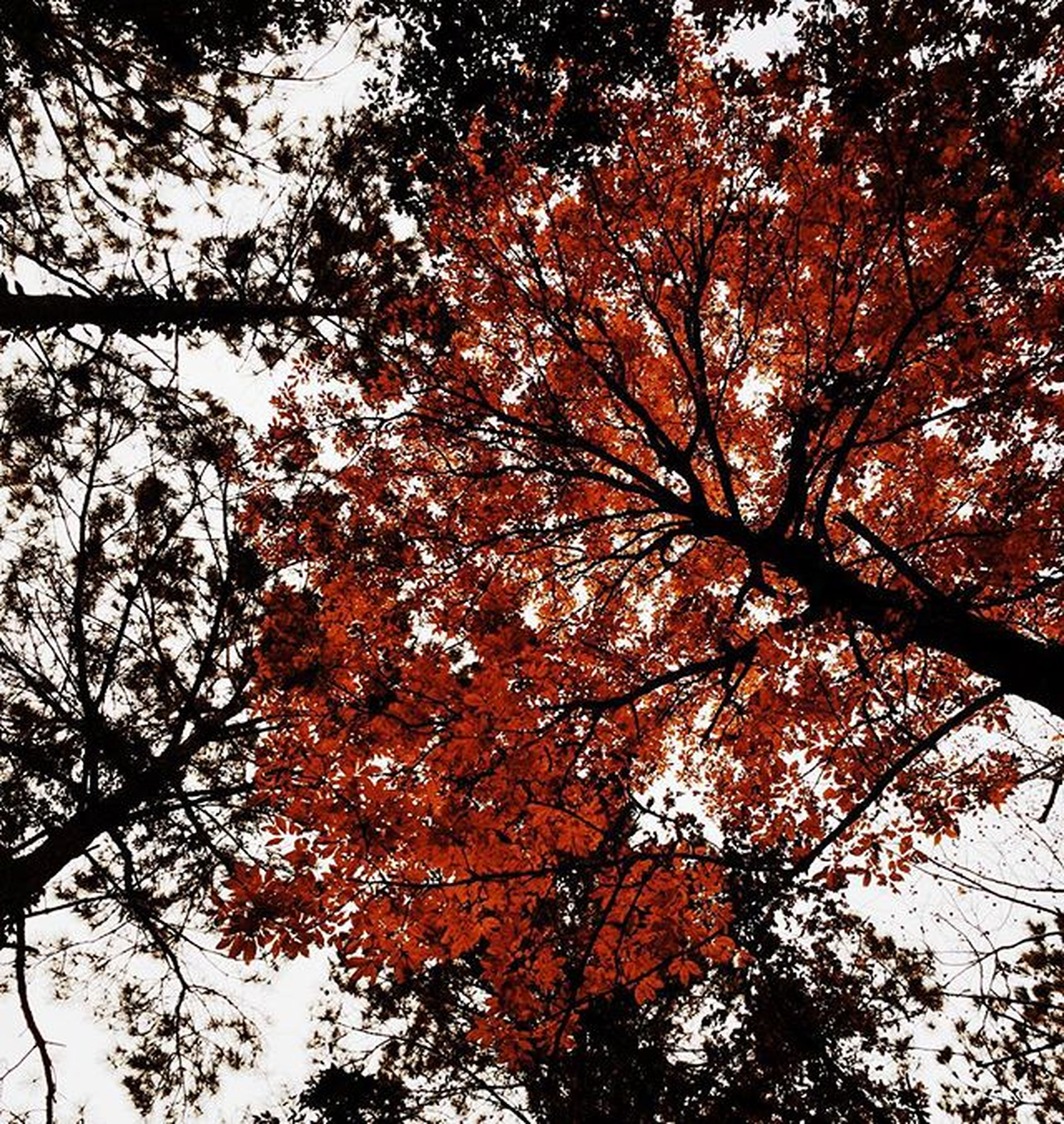 tree, autumn, branch, low angle view, change, season, nature, growth, leaf, tranquility, tree trunk, day, full frame, beauty in nature, orange color, outdoors, no people, backgrounds, sky, close-up