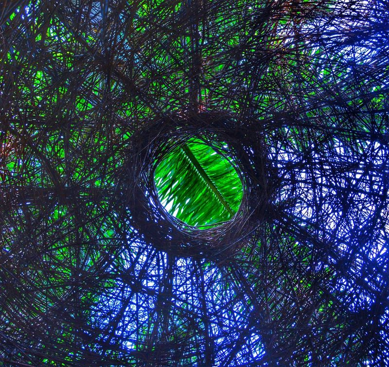 detail of Stickwork By Patrick Dougherty inside Looking Up Looking Through at a Palm Frond and Blue Sky Green Color Low Angle View Architecture at McKee Botanical Garden Vero Beach , FL