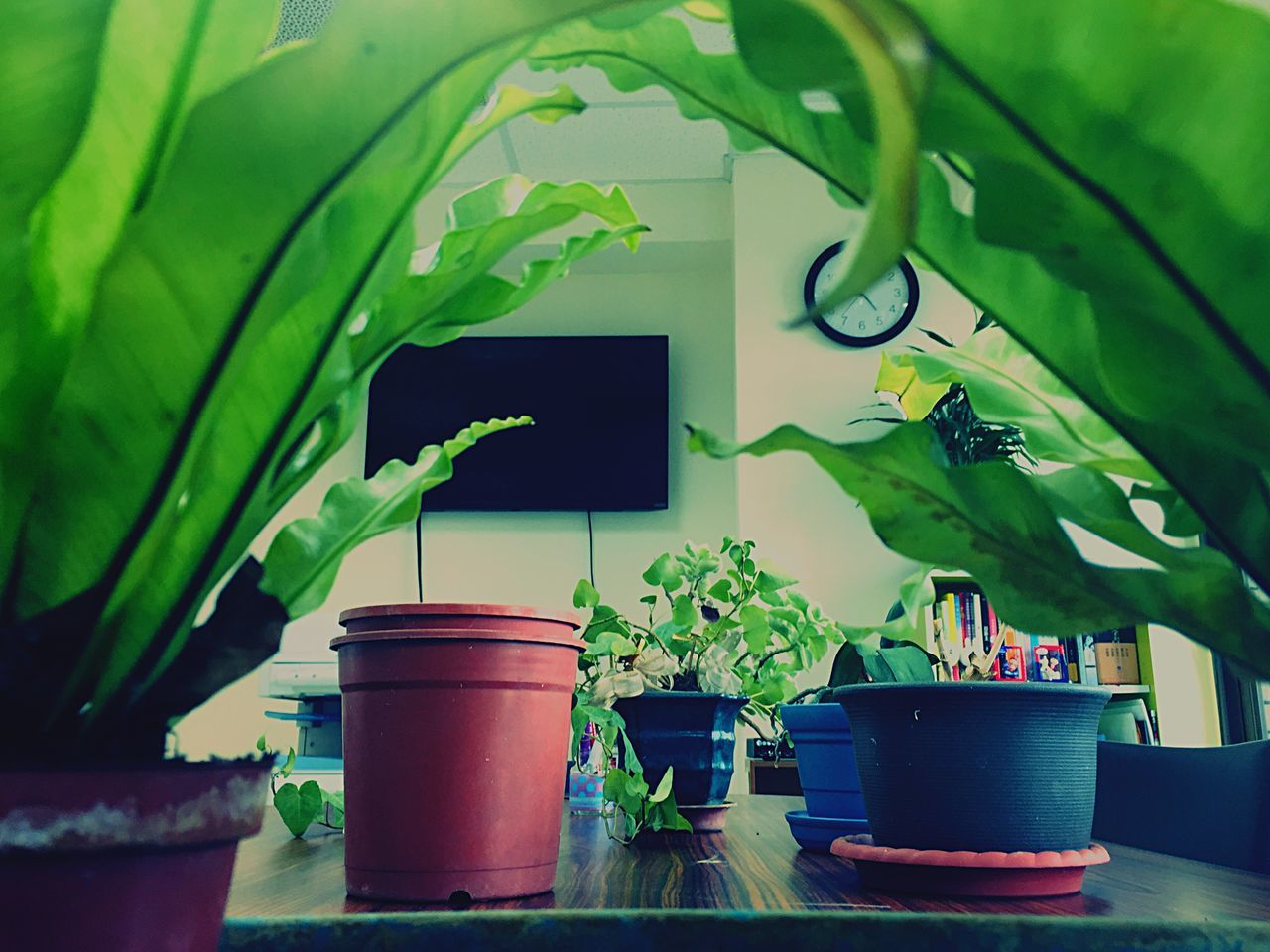 potted plant, leaf, plant, growth, green color, indoors, no people, nature, day, beauty in nature