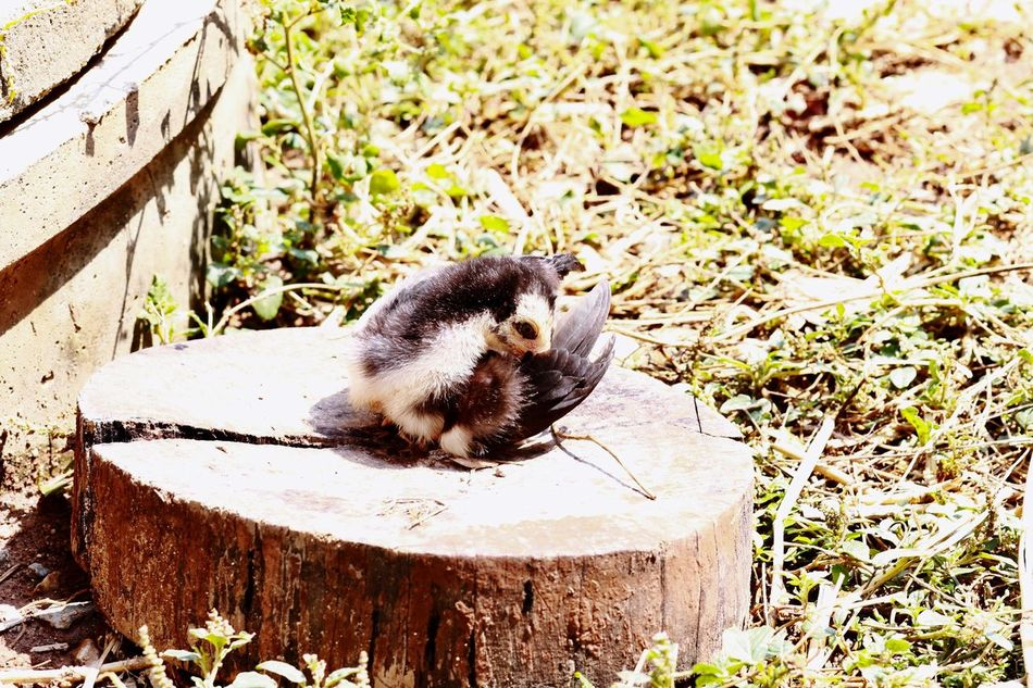 One Animal Animal Themes Wood - Material Animals In The Wild Animal Wildlife Nature No People Mammal Outdoors Chick Close-up Sunbathe