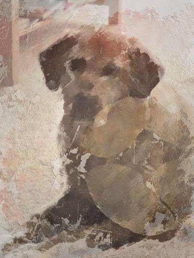 My Labrador Retriever Digital Art Artistic Mobilephotography Labrador Backgrounds Frame No People Architecture Nature Close-up