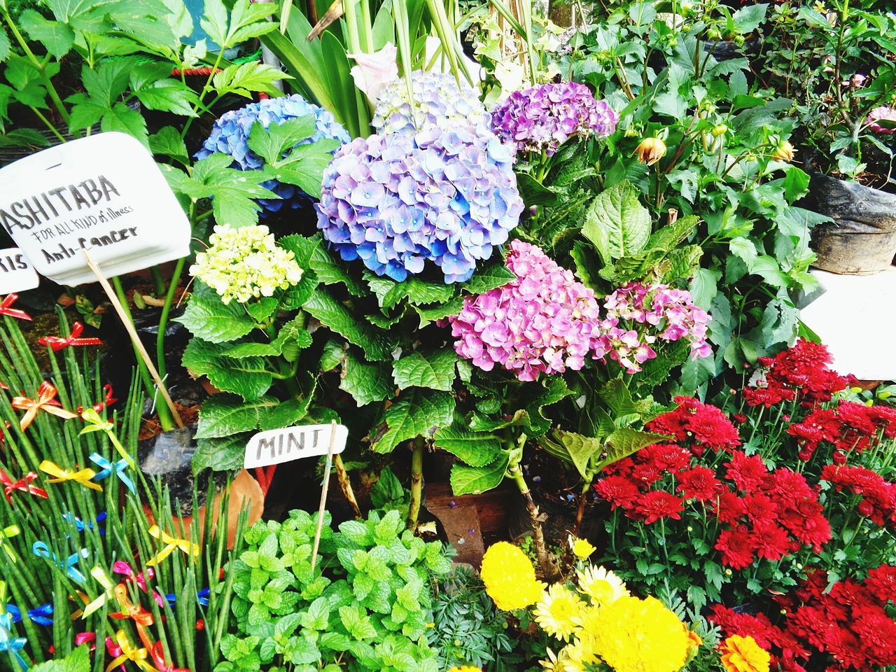 Text Western Script Communication Day Outdoors Flower Freshness Price Tag Market No People Retail  Nature Growth Beauty In Nature Fragility Flower Market Close-up Flower Head Baguio City Freshflowers Fertile Soil Garden Flowers Pink Color Freshness Leisure Activity