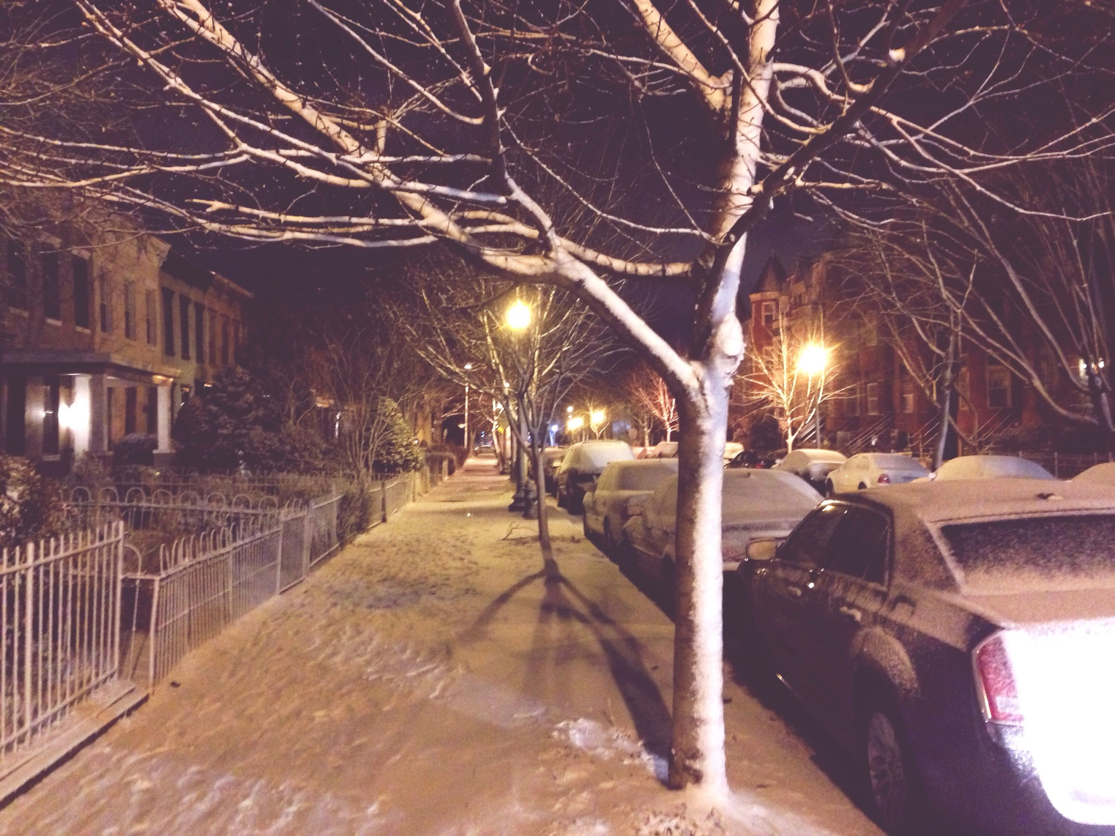 illuminated, night, street light, bare tree, lighting equipment, tree, built structure, building exterior, architecture, branch, street, sky, outdoors, snow, house, glowing, light - natural phenomenon, no people, winter, the way forward
