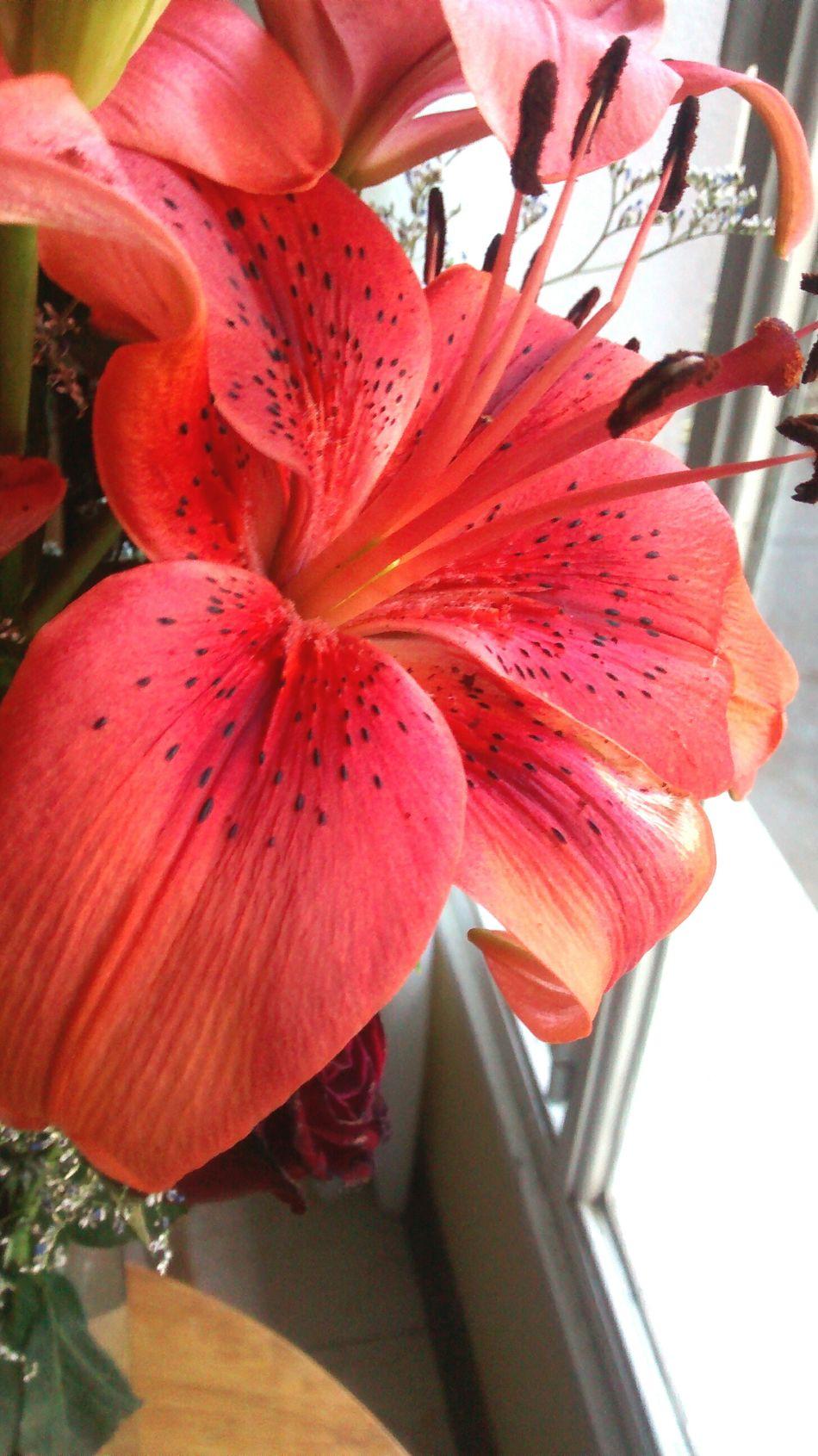Florwer Beautiful Inspiration
