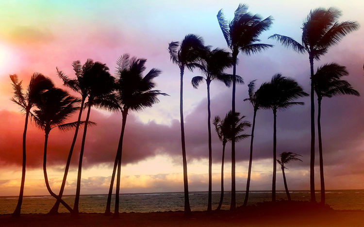 Palmtrees in LSD view Caribbean Sea Beach Beauty In Nature Day Growth Horizon Over Water Nature No People Outdoors Pacific Ocean Palm Tree Scenics Sea Shoreline Silhouette Sky Smartphone Photography Sunset Tranquil Scene Tranquility Tree Tree Trunk Tropical Climate Vacations Water