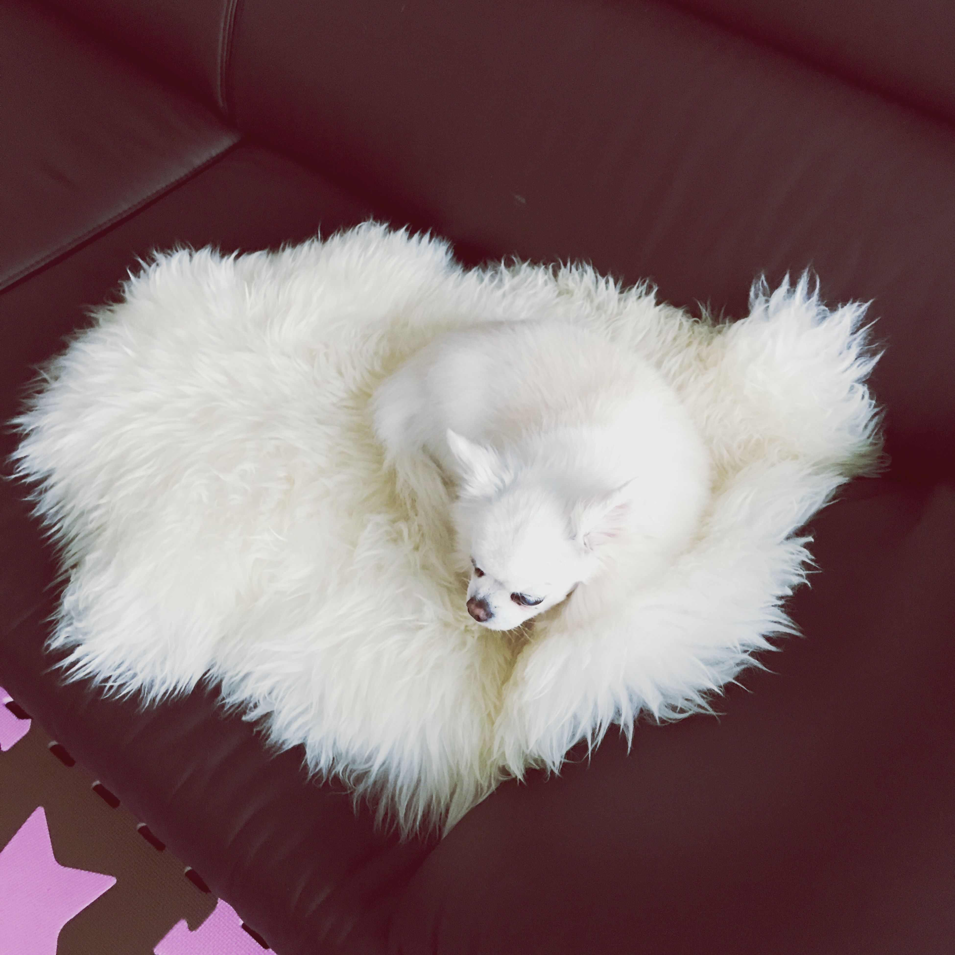 high angle view, one animal, white color, animal themes, no people, mammal, pets, close-up, indoors, domestic animals, day