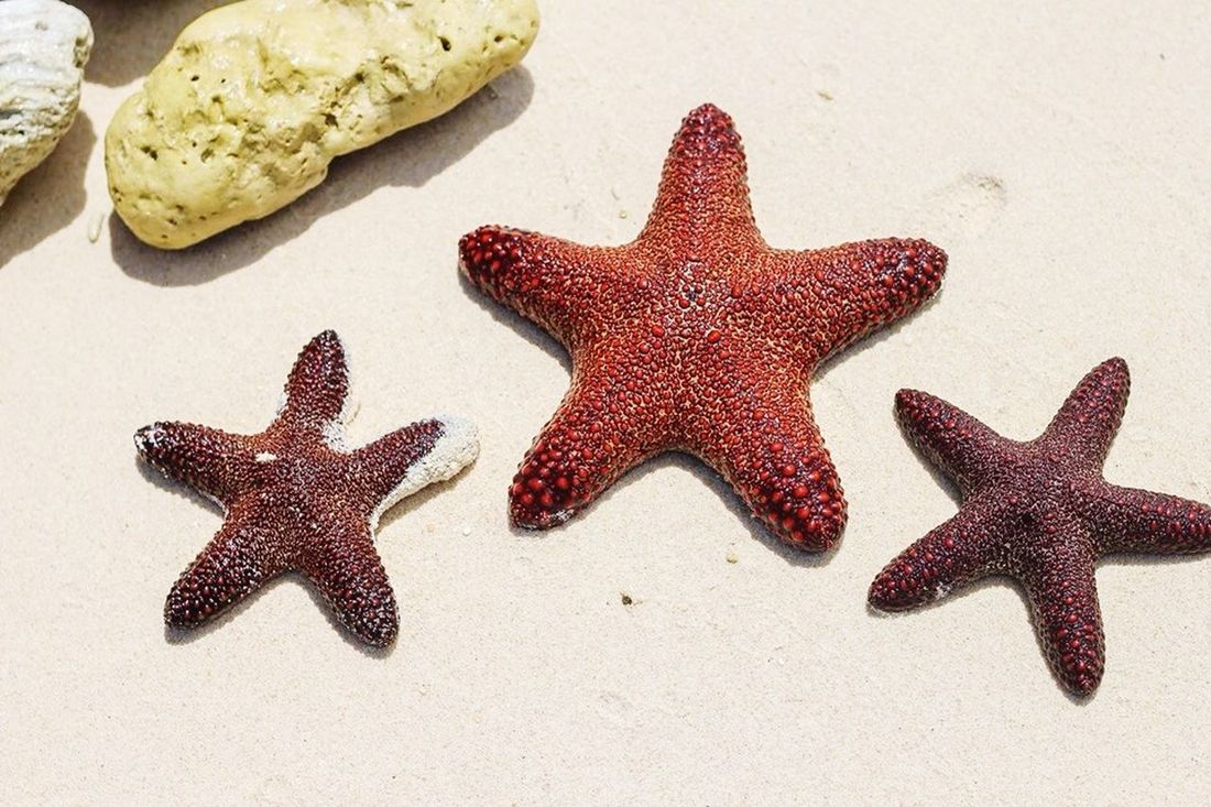 One of the Best parts of Summer Vacation is to explore the sea creatures :) Photo taken at a secluded beach in Hinugtan, Buruanga, Philippines Wanderlust Sea Creatures Summertime Beach Photography Canoneos550d Starfish  Enjoying Life Nature Check This Out