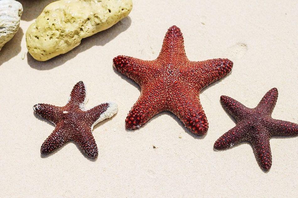 Beautiful stock photos of starfish, Animal Themes, Animals In Captivity, Beach, Beauty In Nature