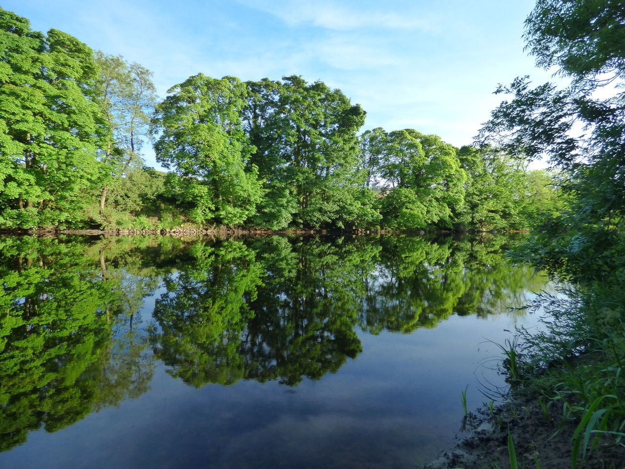 reflection, water, nature, lake, sky, tranquil scene, tranquility, beauty in nature, outdoors, tree, day, waterfront, scenics, no people, standing water, green color, growth, cloud - sky