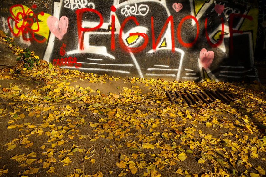 Text Communication Yellow Day Abundance Multi Colored Outdoors No People Flower Nature Close-up Leaves Leaf Autumn Yellow Leaves Tag Wall Wall - Building Feature Ground Level View Ground Paint The Town Yellow