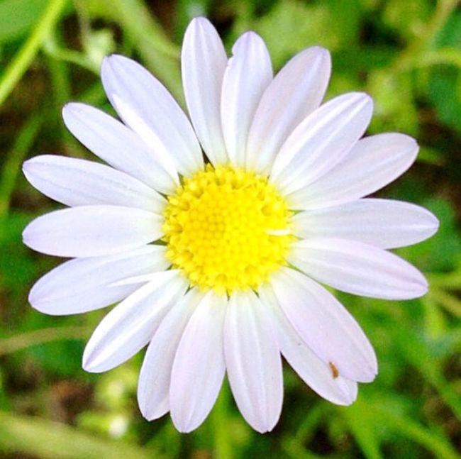 Daisy Flowers Daisy Flower Spring Springtime Arkansas Lake Catherine Catherine's Landing