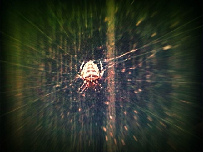 Spider Cobweb Playing With Effects Distortion