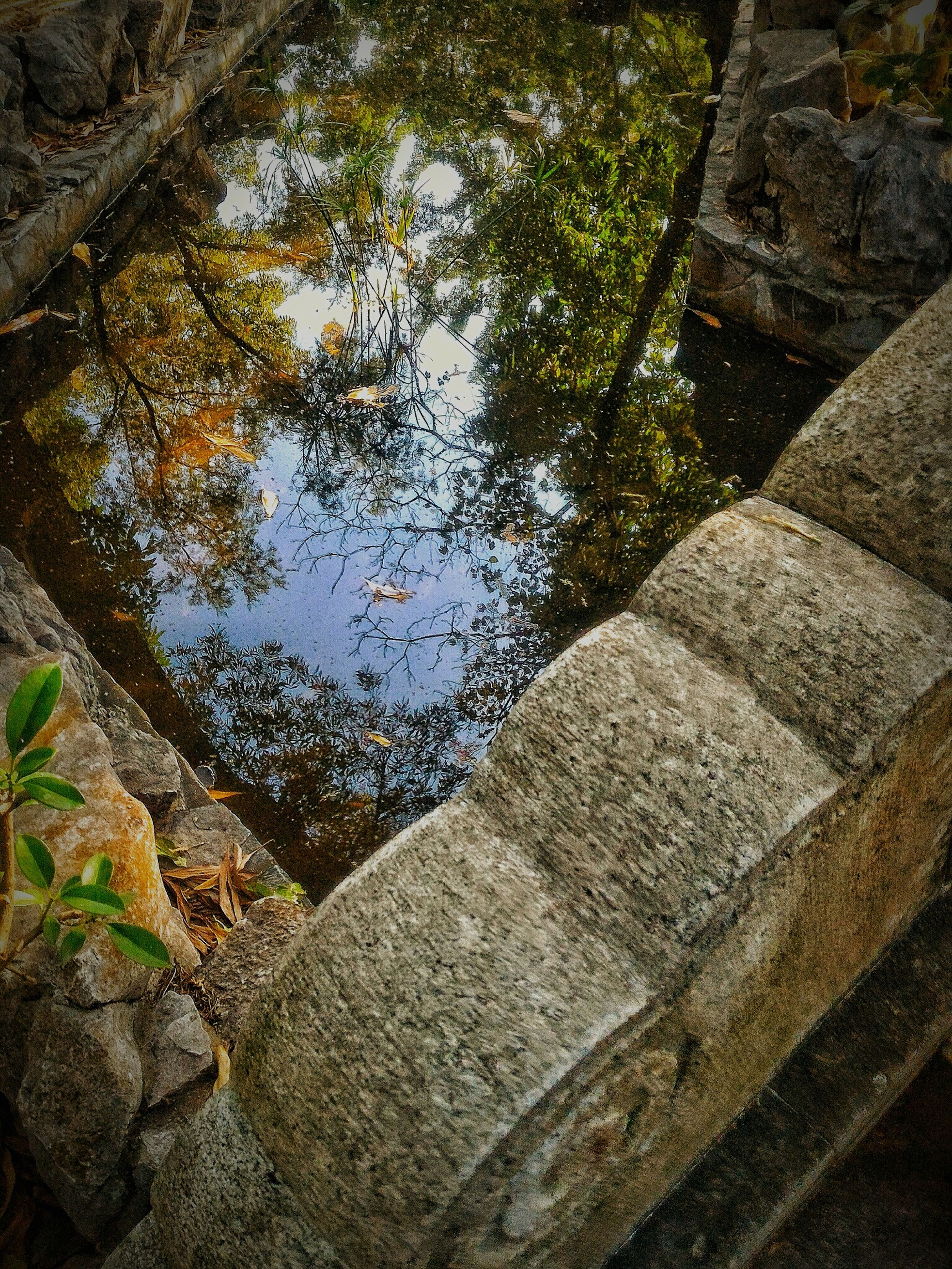 reflection, transparent, day, water, tree, nature, backgrounds, no people, outdoors, close-up, growth, beauty in nature, sky, animal themes