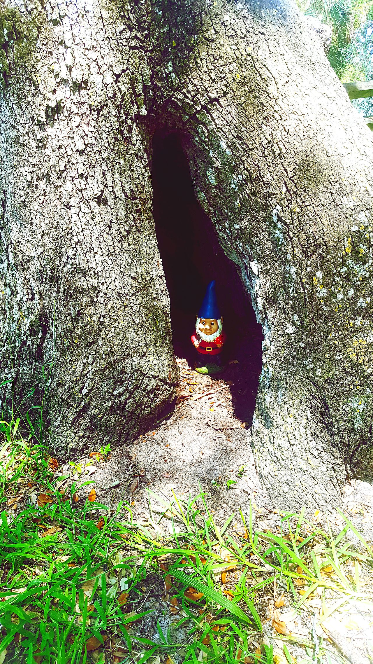 Somebody put a random gnome in a tree in Philippe Park Philippe Park Outdoors Outdoor Photography Gnome Tree Tree Trunk Hidden Trees Tree_collection  Treescollection Gnome In Tree Funny Random Gnomes Of EyeEm Gnome Home Gnomes Home Gnomesiveknown Tree Trunk Splits Tree Trunks Tree Trunk Close Up Tree Trunk. Treelovers Nature Nature_collection Nature Photography