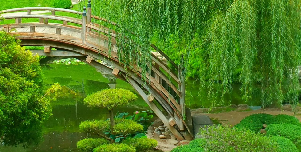 Bridge Showcase: January Nature_collection Nature_perfection Natural Beauty Garden Photography Garden Architecture Tree_collection  Serene Outdoors Tranquil Scene Relaxing Moments My Walk, What I Love To Do Peaceful