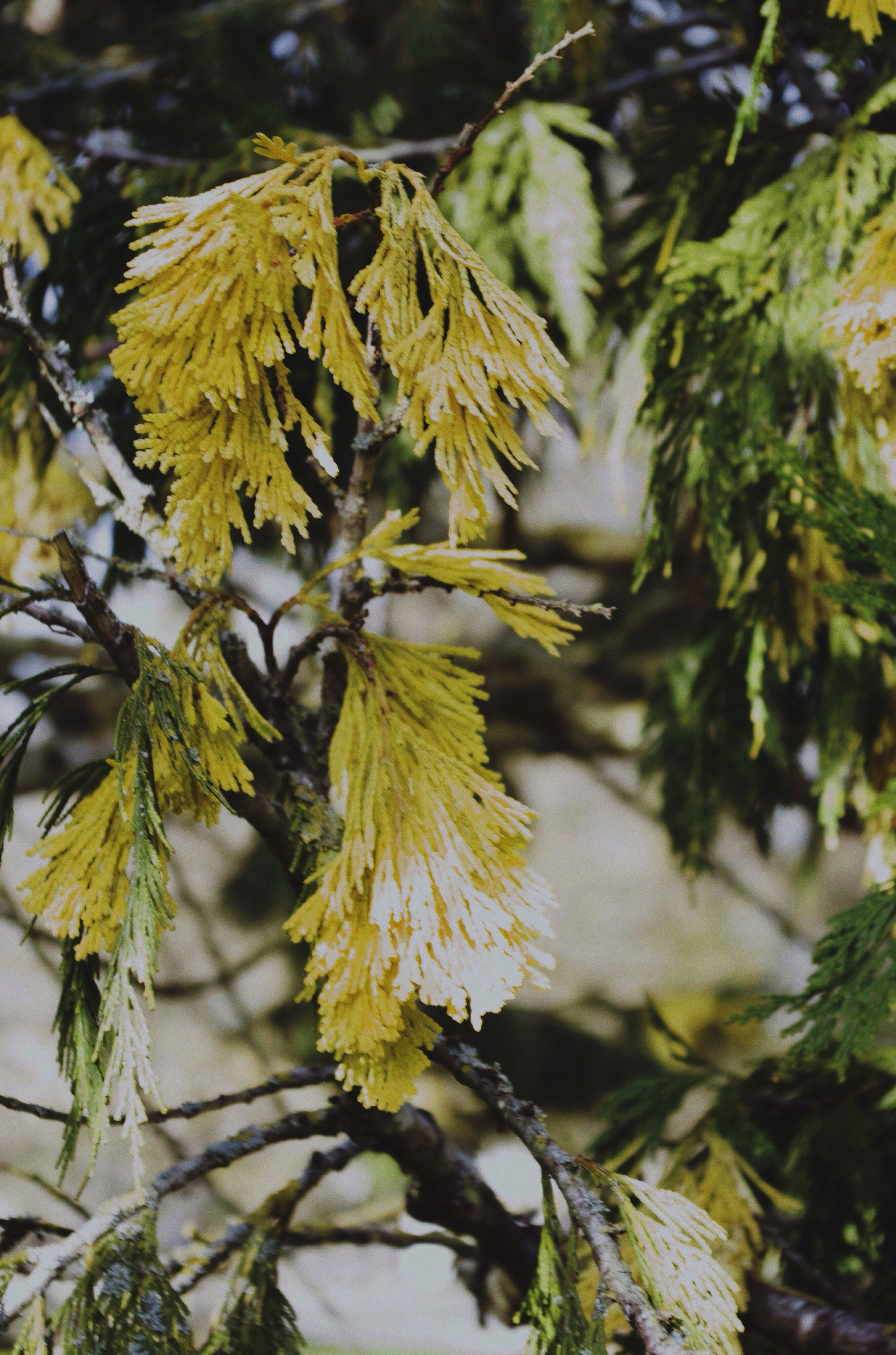 leaf, growth, close-up, yellow, focus on foreground, nature, branch, plant, season, tree, beauty in nature, fragility, outdoors, day, leaves, tranquility, sunlight, autumn, no people, selective focus